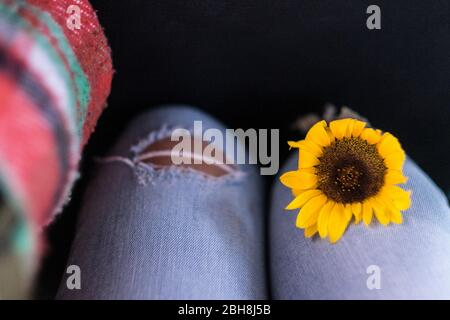 Closeup of yellow sunflower on woman legs on casual jeans - freedom and environent respect concept for modern lifestyle people - Stock Photo