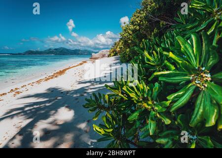Tropical plants at famous Anse Source d'Argent beach on island La Digue in Seychelles. Exotic paradise travel scenery concept shot.
