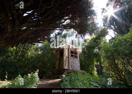 Palermo, old town, botanical garden, wooden hut in the middle of a small forest - Stock Photo