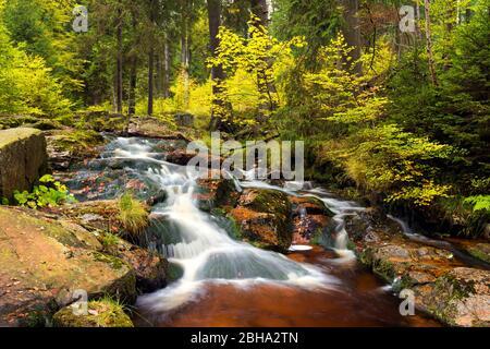 Bode, Bodetal, Fluss, Wald, Laubfärbung, Herbst, Harz, Sachsen-Anhalt, Deutschland, Europa - Stock Photo
