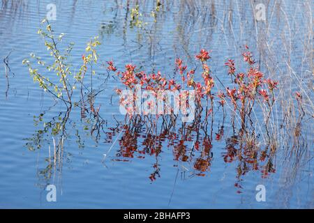 Waters in the nature reserve Goldenstedter Moor, Goldenstedt, Vechta district, Lower Saxony, Germany, Europe - Stock Photo