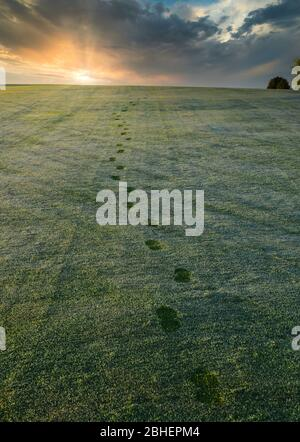 Footprints in the dew covered grass on a golf course fairway walking toward the setting sun in the distance. - Stock Photo