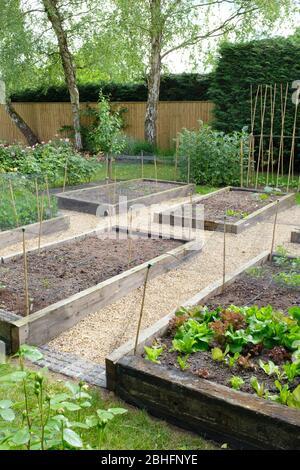 Vegetable gardening, vegetable beds in a garden, UK - Stock Photo