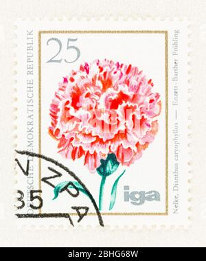 SEATTLE WASHINGTON - April 25, 2020: 1975 East Germany postage stamp featuring pink carnation in bloom. Scott # 1673