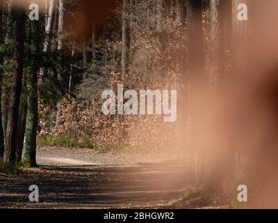 Blurry abstract autumn way in forest, lovely abstract blurred city park on a sunny day - Stock Photo