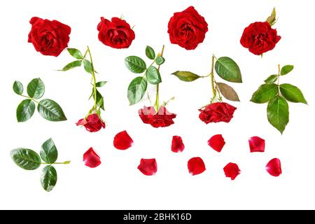 Flowers composition. Red roses isolated on white background. Flat lay, top view. - Stock Photo