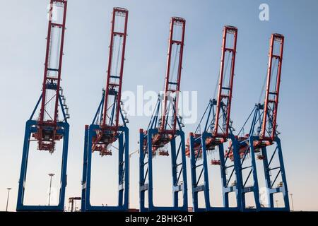 A row of large containter gantry cranes with jibs up at the Container Terminal Tollerort CTT in the Port of Hamburg, run by the HHLA - Stock Photo