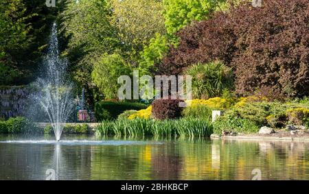 Duck pond at Pinner Memorial Park, Pinner, Middlesex, north west London UK, photographed on a sunny spring day. - Stock Photo