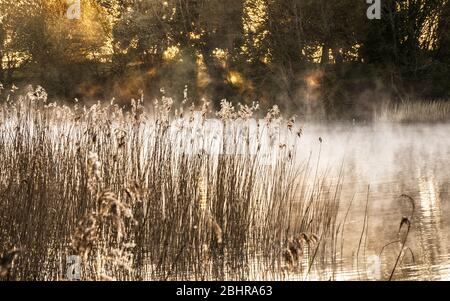 The rising sun filters through the trees and backlights the mist at Coate Water in Swindon. - Stock Photo