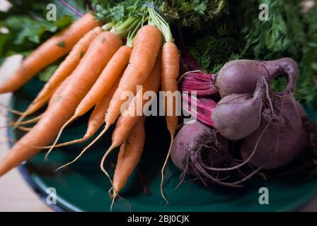 Bunches of fresh carrots and beetroot on dark green platter - - Stock Photo