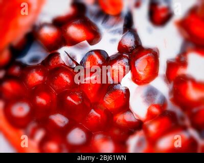 Close-up pomegranate fruit (food) portrait showing seeds prominently - Stock Photo
