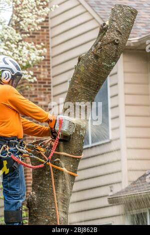 Wood cutter, arborist using an electric chainsaw chopping up a tree - Stock Photo