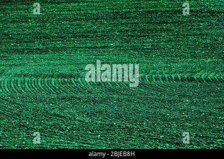 Green lines abstract background texture in petrol or teal - Stock Photo