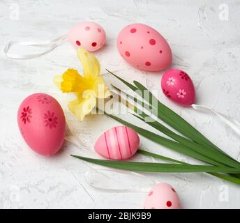 yellow blooming daffodil and easter pink eggs on a white background, holiday backdrop. - Stock Photo