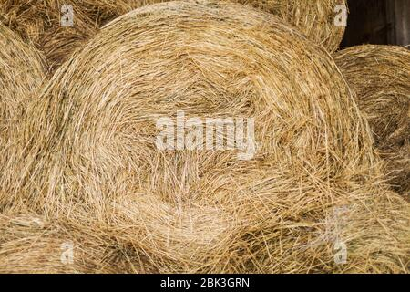 Dry-hay warehouse for pet food, Storage of hay - Stock Photo