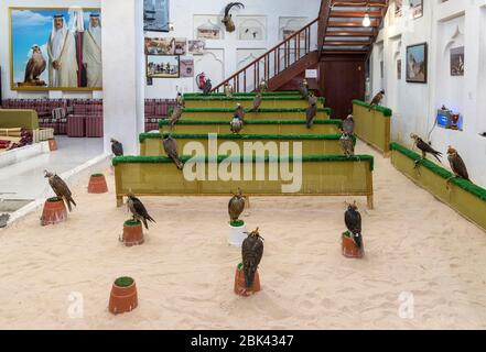 Falcons in the Falcon Souq, Doha, Qatar, Middle East - Stock Photo