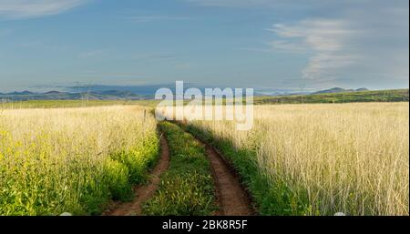 A dirt road weaving through a green field to distant mountains in the Aqua Fria National Monument of Arizona. - Stock Photo