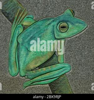 Kerala, India - June 2, 2018 - frog picture in a board in parambikulam forest reserve - Stock Photo