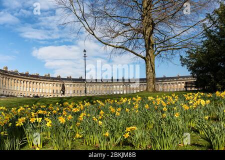 Spring Daffodils in Royal Victoria Park, Bath, with the Royal Crescent in the background, England, UK - Stock Photo