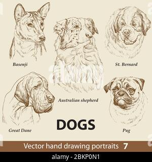 Hand drawing set of a cute dogs breeds part 7. Dogs head isolated on beige background. Pencil hand drawn realistic portrait. Animal collection. Good f - Stock Photo
