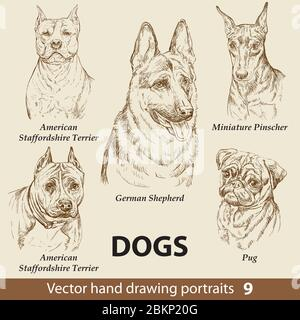 Hand drawing set of a cute dogs breeds part 9. Dogs head isolated on beige background. Pencil hand drawn realistic portrait. Animal collection. Good f - Stock Photo