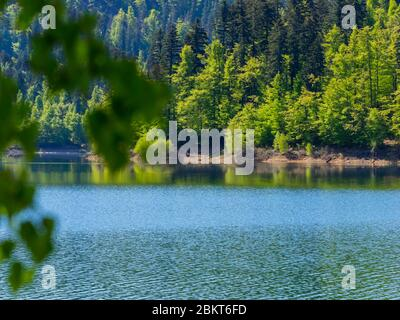 Spring season in Green forest woodland Lokve lake Croatia Europe - Stock Photo