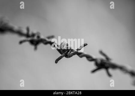 Black and white rusty barbed wire - Stock Photo
