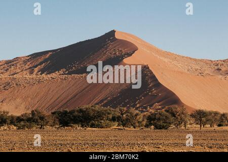Mountainous sand-dunes and camelthorn acacia trees in the Namib desert in the Namib-Naukluft National Park of Namibia