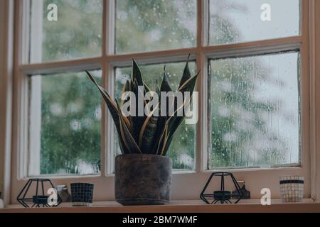 Low angle view of a plant in industrial style cement pot and tea light holders on a windowsill at home, shallow focus, rain on the window glass.