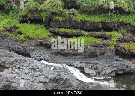 Palikea stream running through volcanic rock with Scaevola taccada and tropical trees growing on the rock at the Oheo Gulch in Hana, Maui, Hawaii, USA