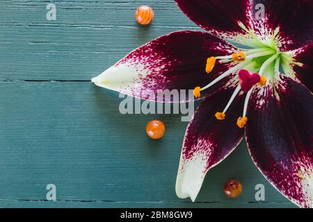 Lillies with Carnelian and Red Jasper on Turquoise Background with Space for Copy - Stock Photo