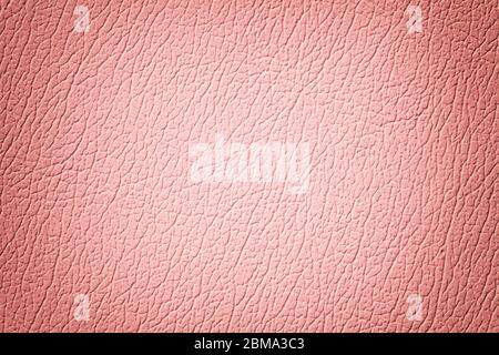 Light pink leather texture background, closeup. Rose cracked backdrop from wrinkle skin, structure of pearl textile with vignette. - Stock Photo