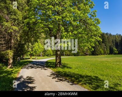 Country-road countryroad Preserved forest resort Golubinjak near Lokve Croatia Europe - Stock Photo