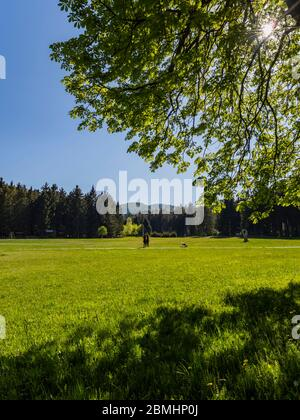Preserved forest resort Golubinjak near Lokve Croatia Europe visitors people with dog walking walk - Stock Photo