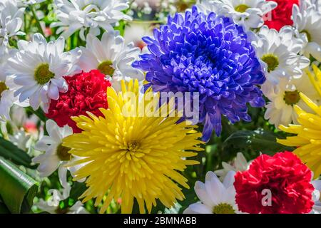 Bright and beautiful flowers of dahlias, chrysanthemums and carnations, of different colors, bloom in the garden - Stock Photo