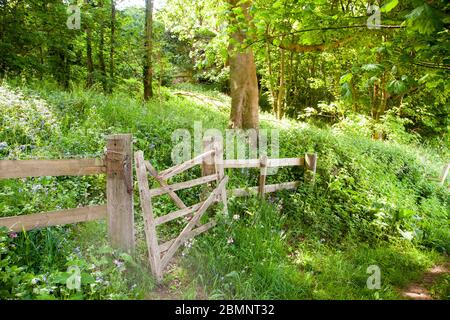 Broken damaged dilapidated wooded five bar farm gate in an English woodland - Stock Photo