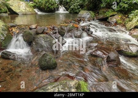 Rushing water flows through creek bed in rain forest. Water Flow - Stock Photo