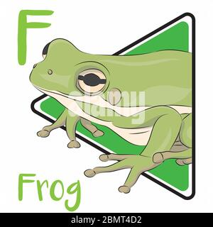 F for frog, the animal that can be found anywhere and Frog is an amphibian animal that doing metamorphosis in its life cycle - Stock Photo