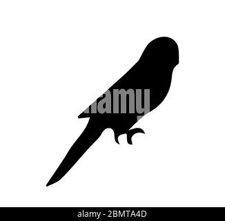 Silhouette of budgerigar on white background - Stock Photo