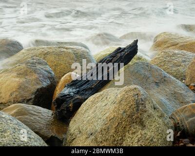 Steinstrand bei Lohme, Stück Holz, Insel Rügen, Ostsee, Mecklenburg-Vorpommern, Deutschland Stock Photo