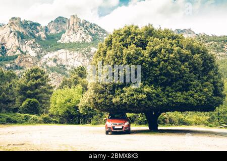 Large and mature pine tree with mountain backdrop - Stock Photo