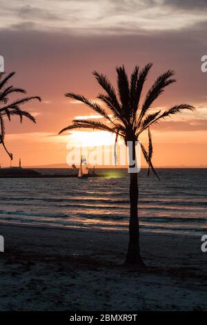 Sunset in Palma de Mllorca, Palm with Surfer - Stock Photo