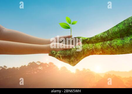environment Earth Day Hands from nature. Girl hands holding trees growing on golden light nature mountain background.  Ecology and Nature concept. - Stock Photo