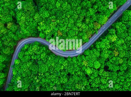 Aerial view of thick green forest with winding road cutting through it. Forest in summer