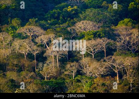 Beautiful rainforest in evening light in Soberania national park, Republic of Panama. - Stock Photo