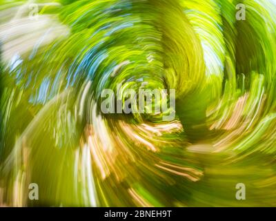 Green forest creating vertigo intentionally blurry representing maximum utmost circular speed speedy fast movement - Stock Photo