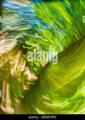 Green forest creating vertigo intentionally blurry representing maximum utmost circular speed speedy fast movement - Stock Photo