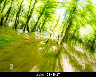 Green forest run intentionally blurry representing maximum utmost speed speedy fast movement trees and branches leaves - Stock Photo