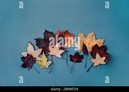 Flat lay of dried tree leaves in autumn colors on blue background. - Stock Photo
