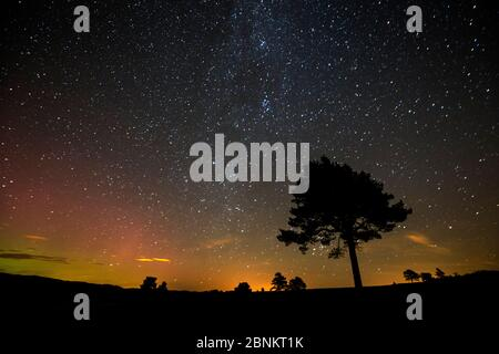 Scots pine (Pinus sylvestris) silhouetted against night sky, Cairngorms National Park, Scotland, UK, October 2015. - Stock Photo